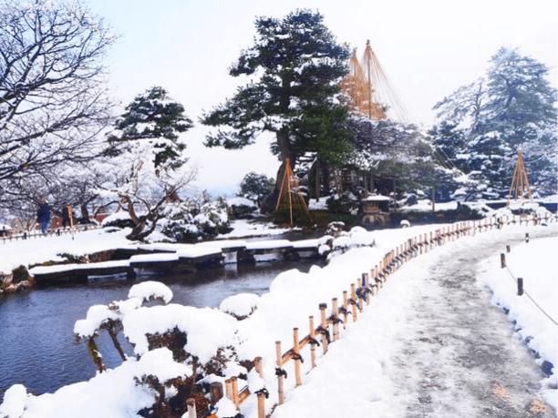 兼六園の雪吊りは冬の朝がおすすめ